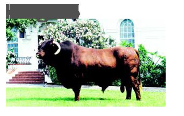 King 55