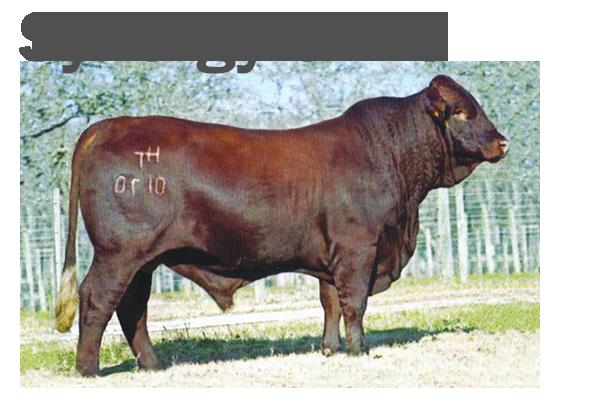 Synergy 0170